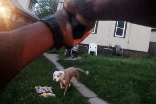 Minneapolis Family Files Lawsuit 2 Years After Police Officer Shot Dogs